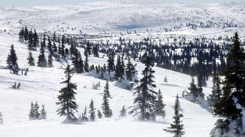 paysages Nord du Québec Canada