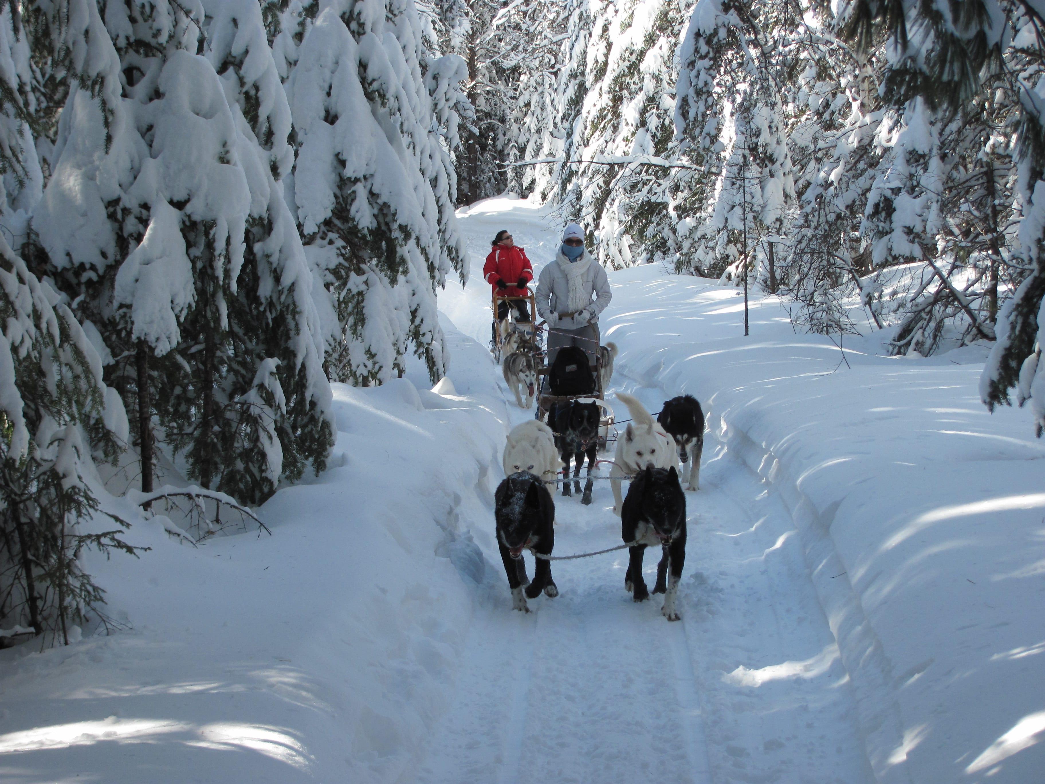 traineau à chien au canada
